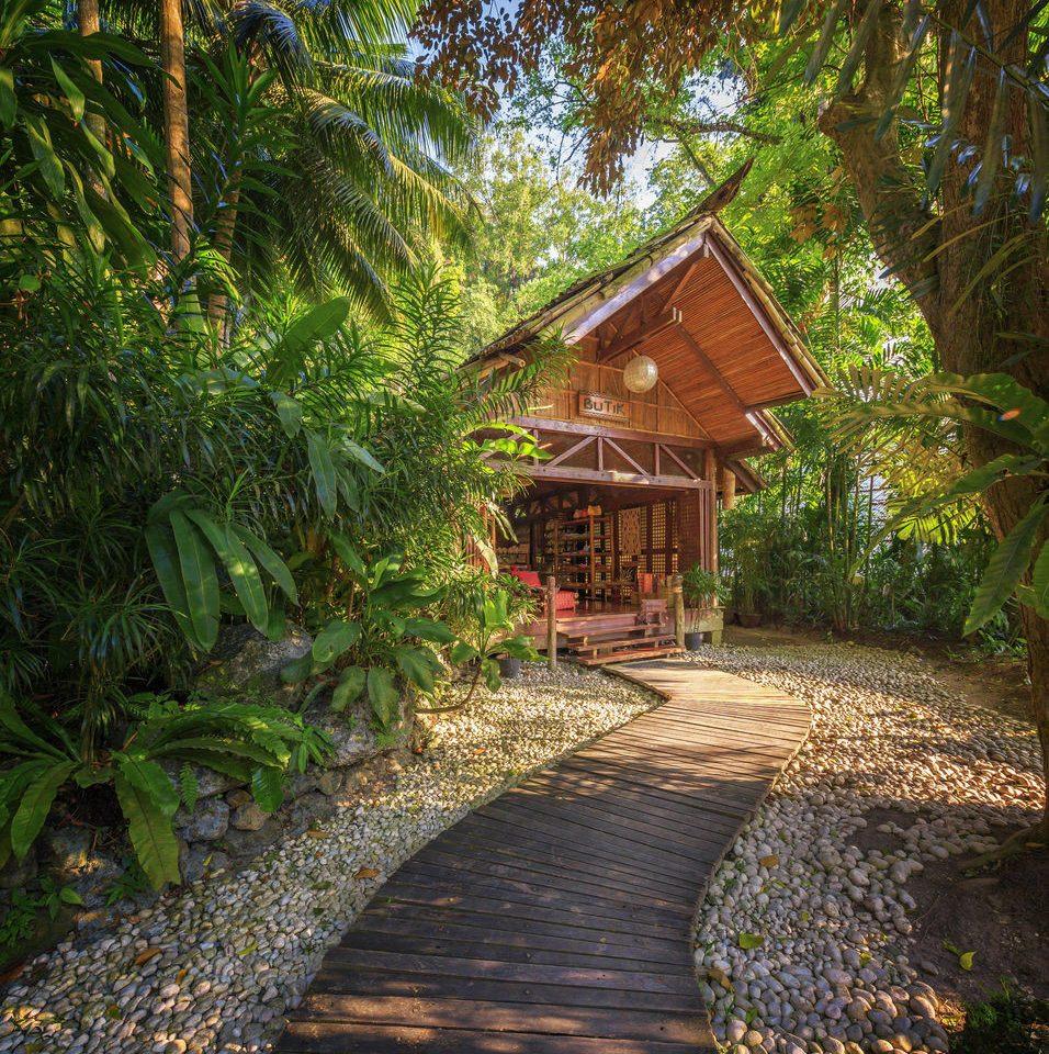 tree property botany Garden woodland backyard Forest cottage yard Jungle Resort rainforest botanical garden plantation plant wooded surrounded