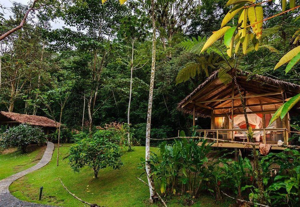 tree grass habitat botany Jungle rainforest Forest Resort rural area Garden Village tropics plant lush surrounded