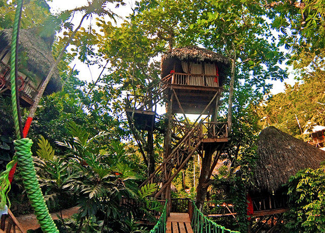 tree habitat botany Jungle rainforest Forest tree house Garden Resort outdoor structure flower plant
