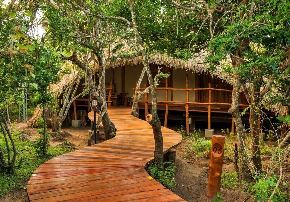 tree ground habitat natural environment Resort plant Jungle rainforest Forest hut eco hotel Garden tropics