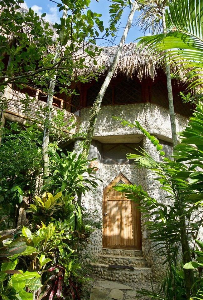 tree habitat plant botany Jungle rainforest Garden Forest hut Resort flower shrine palm tropics temple cottage botanical garden stone