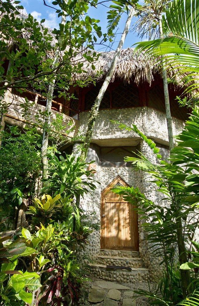 tree habitat plant botany Jungle rainforest Garden Forest hut Resort flower shrine palm tropics temple cottage botanical garden stone