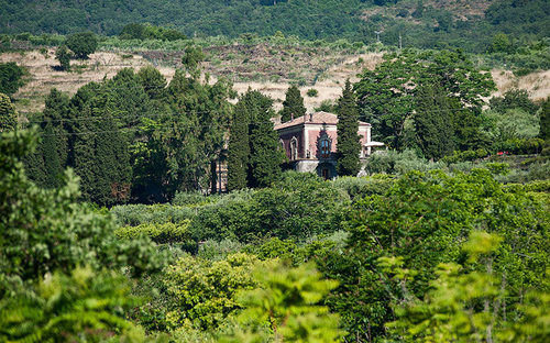 tree mountain Forest green lush hill rural area wooded Garden Village landscape flower monastery plantation château bushes valley Jungle aerial photography plant surrounded hillside