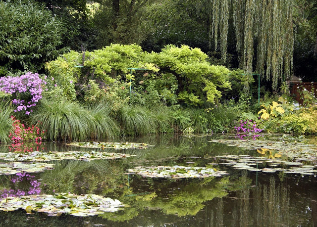 tree Nature pond water ecosystem flora flower botany plant Garden River woodland stream botanical garden Forest fish pond surrounded wooded