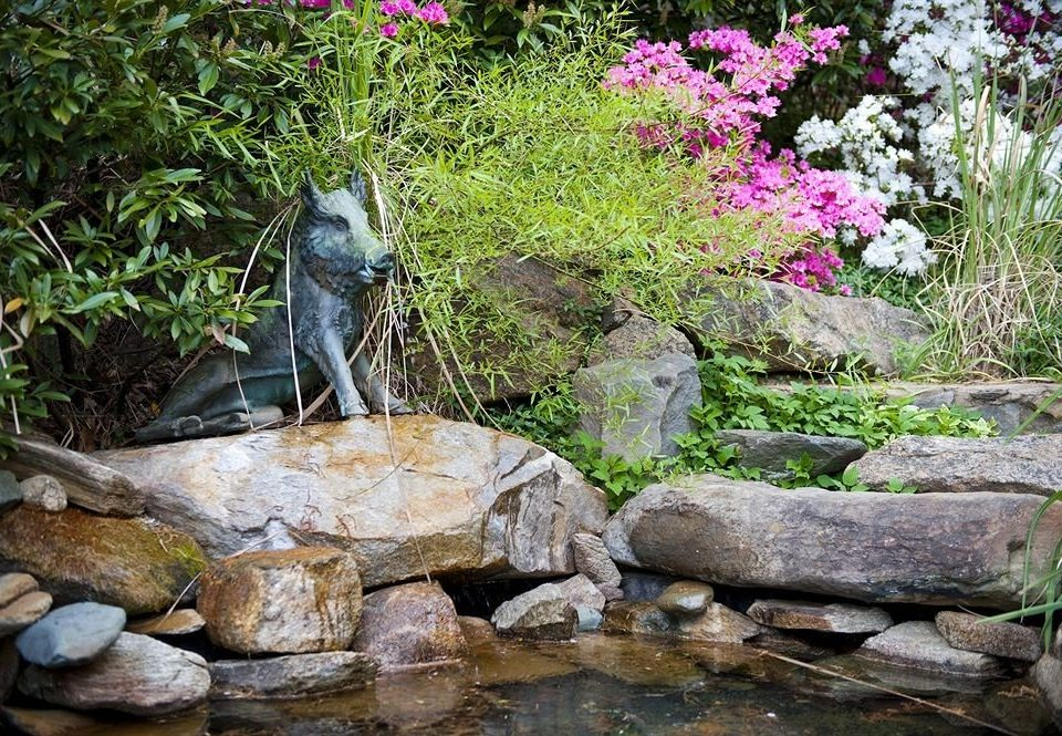 tree rock wilderness animal botany pond woodland water feature stream Garden Forest Waterfall backyard flower mammal autumn surrounded