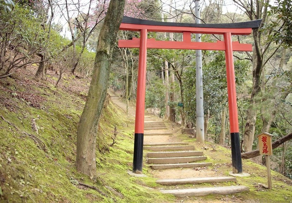 tree grass red torii trail rolling stock shrine shinto shrine outdoor structure Forest wooded