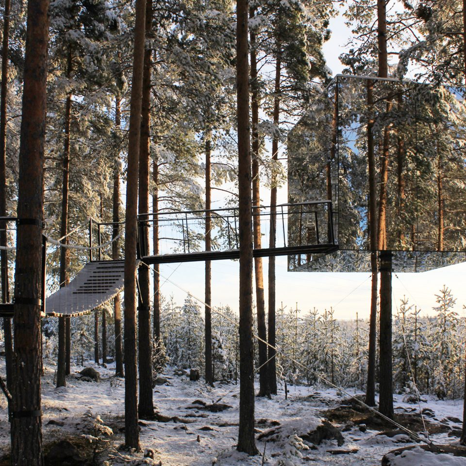 Hotels tree habitat snow Winter Nature wilderness natural environment weather woodland season Forest woody plant sunlight autumn conifer wooded day surrounded