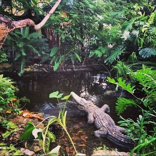 tree habitat fauna natural environment rainforest botany Jungle pond reptile Forest branch swamp plant surrounded