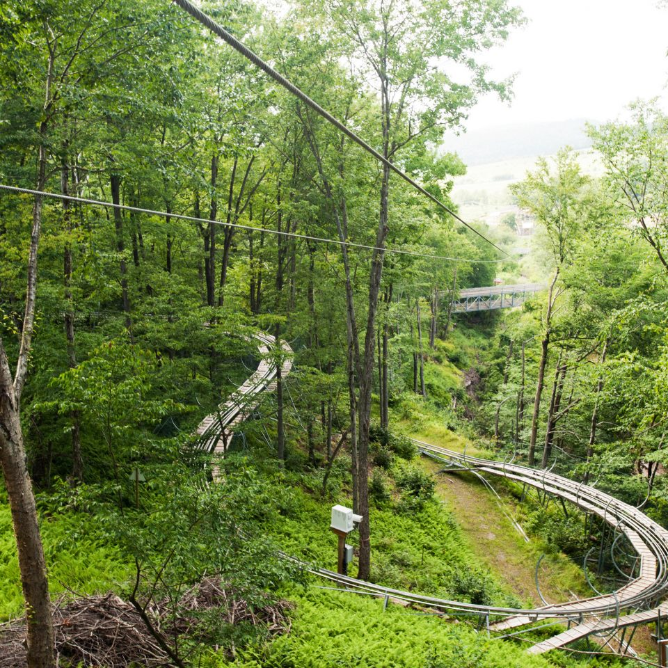 tree grass habitat natural environment canopy walkway Forest woodland rainforest old growth forest rope bridge Jungle trail suspension bridge bridge flower wooded plant lush