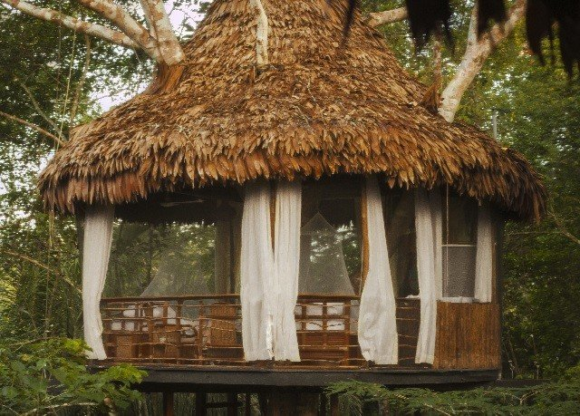 tree habitat hut gazebo thatching Jungle Forest outdoor structure cottage