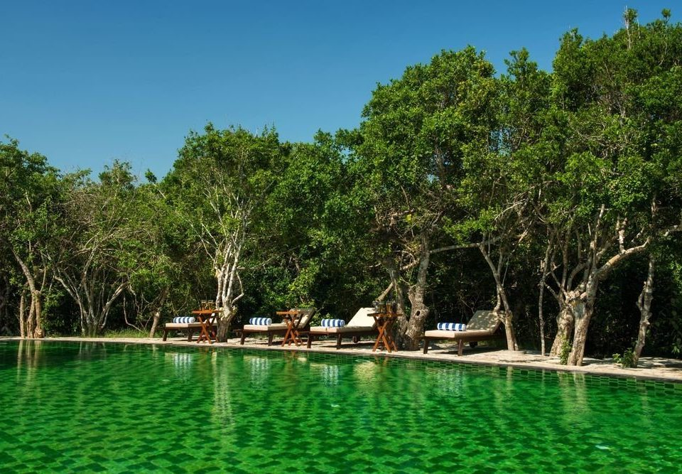 tree ecosystem green Lagoon Jungle Lake Resort surrounded Forest wooded day