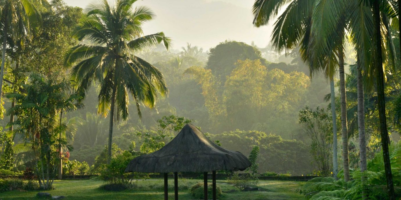 Natural wonders Nature Outdoors Tropical Wellness tree water habitat palm natural environment plant flora Forest botany rainforest Jungle tropics arecales morning woody plant sunlight Lake wetland palm family swamp flower lined surrounded distance day
