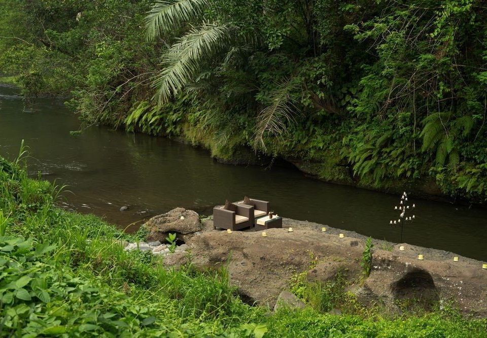 water tree River habitat grass creek Nature vegetation Lake wilderness watercourse stream green pond natural environment ecosystem Forest park Jungle rainforest rapid woodland edge plant valley water feature shore overlooking surrounded walkway