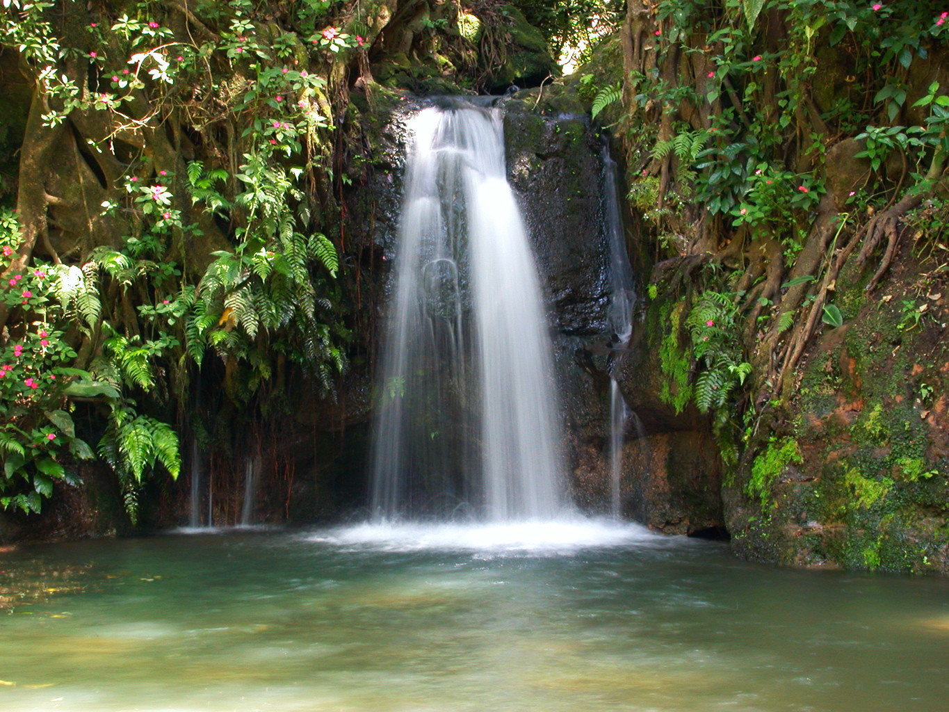 Natural wonders Outdoors Scenic views Waterfall tree Nature water habitat watercourse water feature botany rainforest Forest River stream wasserfall Jungle autumn