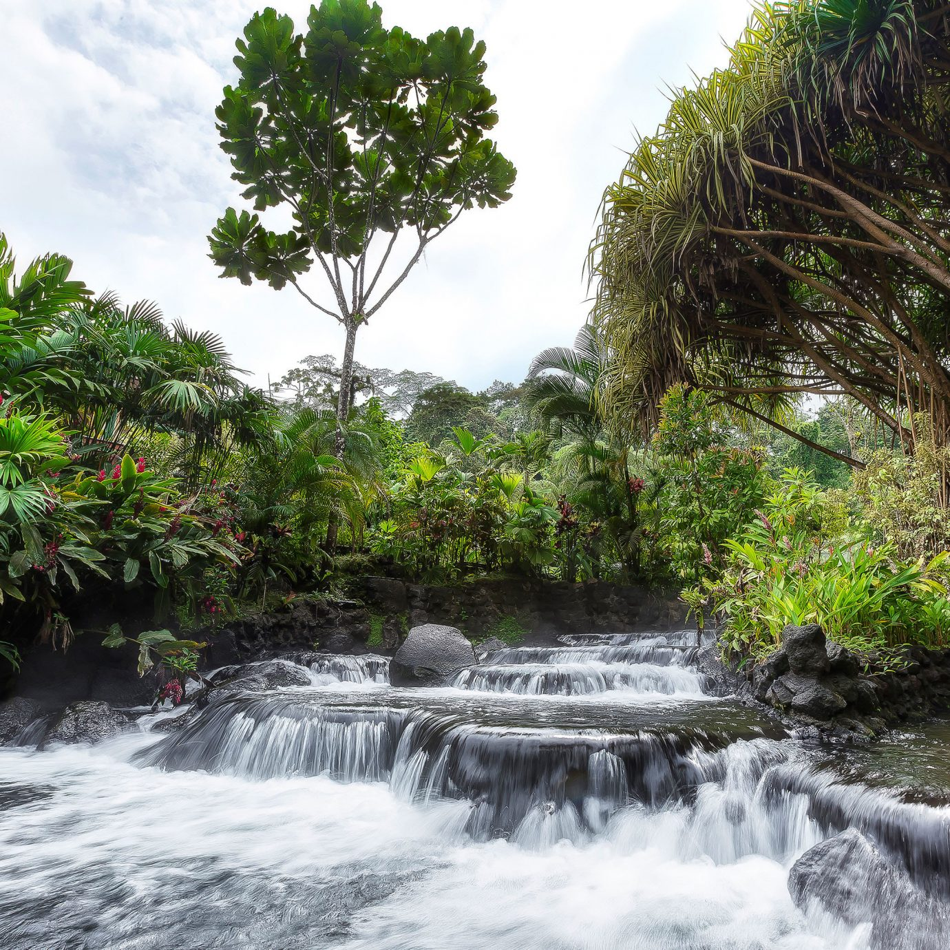 Outdoor Activities River Waterfall tree water Nature habitat vegetation watercourse botany rainforest Jungle Forest water feature stream flower tropics rapid
