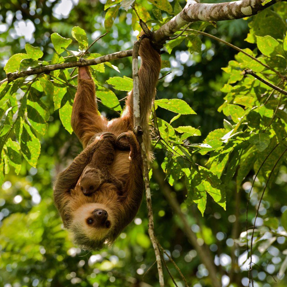 Nature Outdoors Wildlife tree animal mammal vertebrate fauna branch flower Jungle Forest