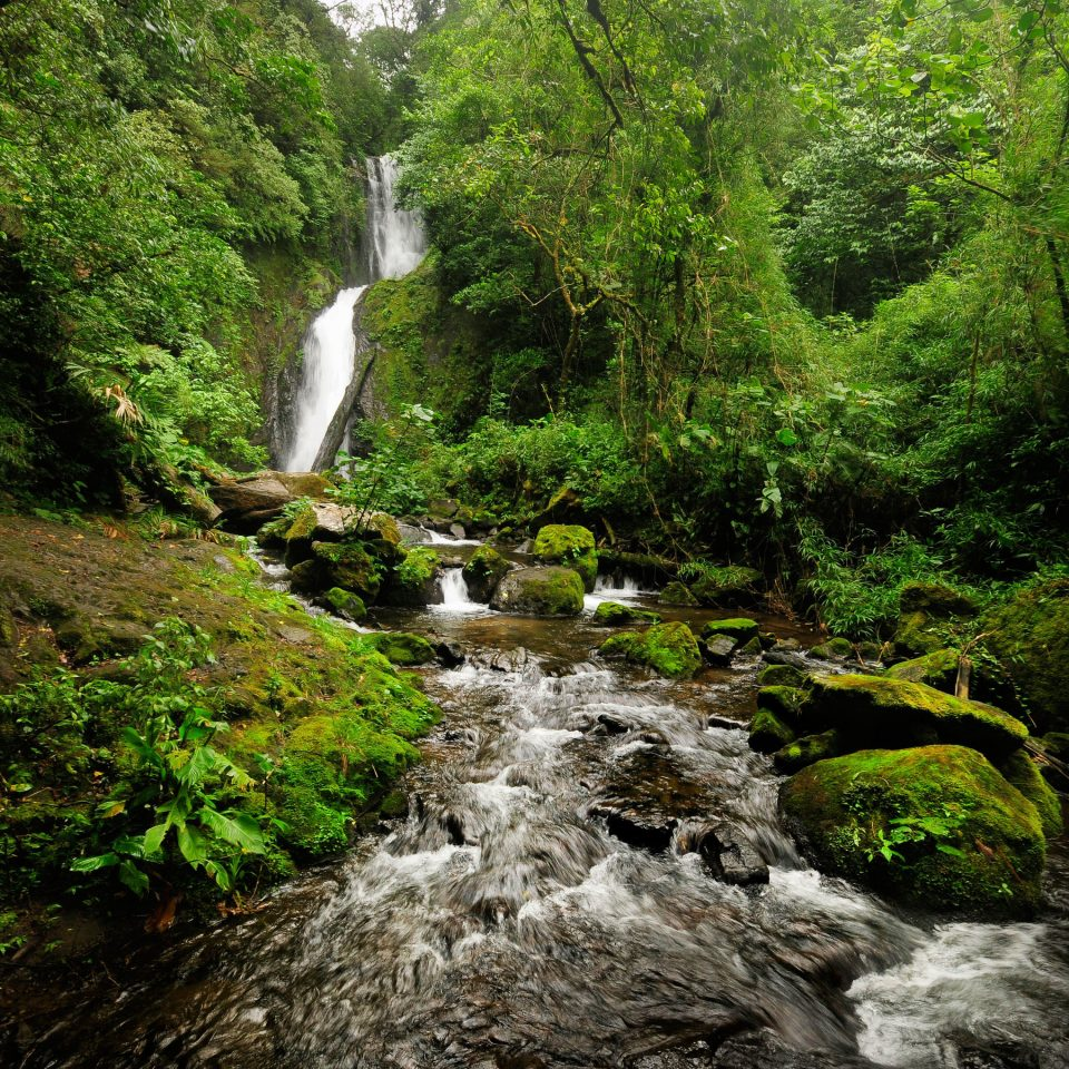 tree Nature water Waterfall habitat wilderness natural environment Forest water feature stream rainforest woodland River old growth forest wasserfall ravine Jungle wooded surrounded hillside lush