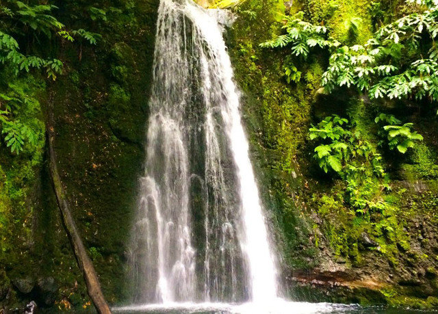 tree Nature water Waterfall water feature watercourse rainforest wasserfall stream Jungle Forest wooded