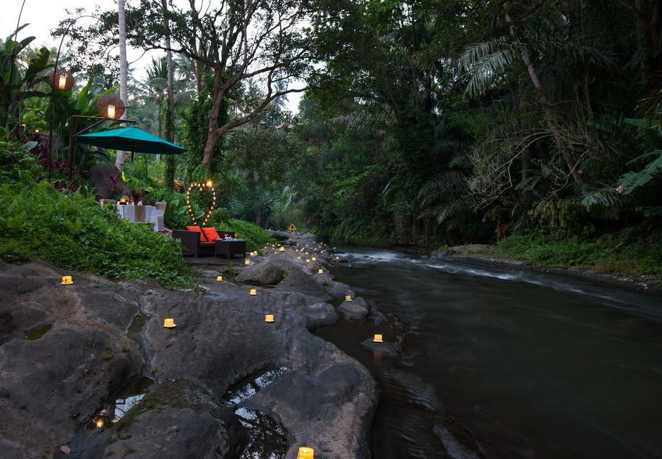 tree wilderness River geological phenomenon Forest Jungle stream screenshot rainforest waterway