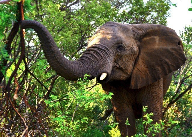 tree elephant indian elephant animal mammal elephants and mammoths Wildlife fauna Forest african elephant Jungle Safari savanna wooded trunk bushes lush