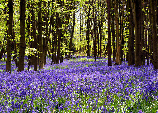 tree plant prairie gentian Forest habitat Nature woodland flower natural environment ecosystem flora botany meadow land plant wildflower park sunlight field surrounded lupin flowering plant middle biome wooded lush