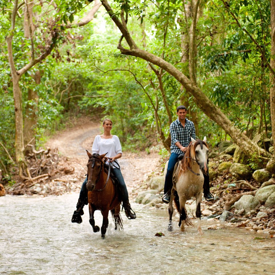 Nature Outdoor Activities Outdoors Scenic views tree ground horse Wildlife trail riding horse like mammal animal sports equestrianism Forest wooded