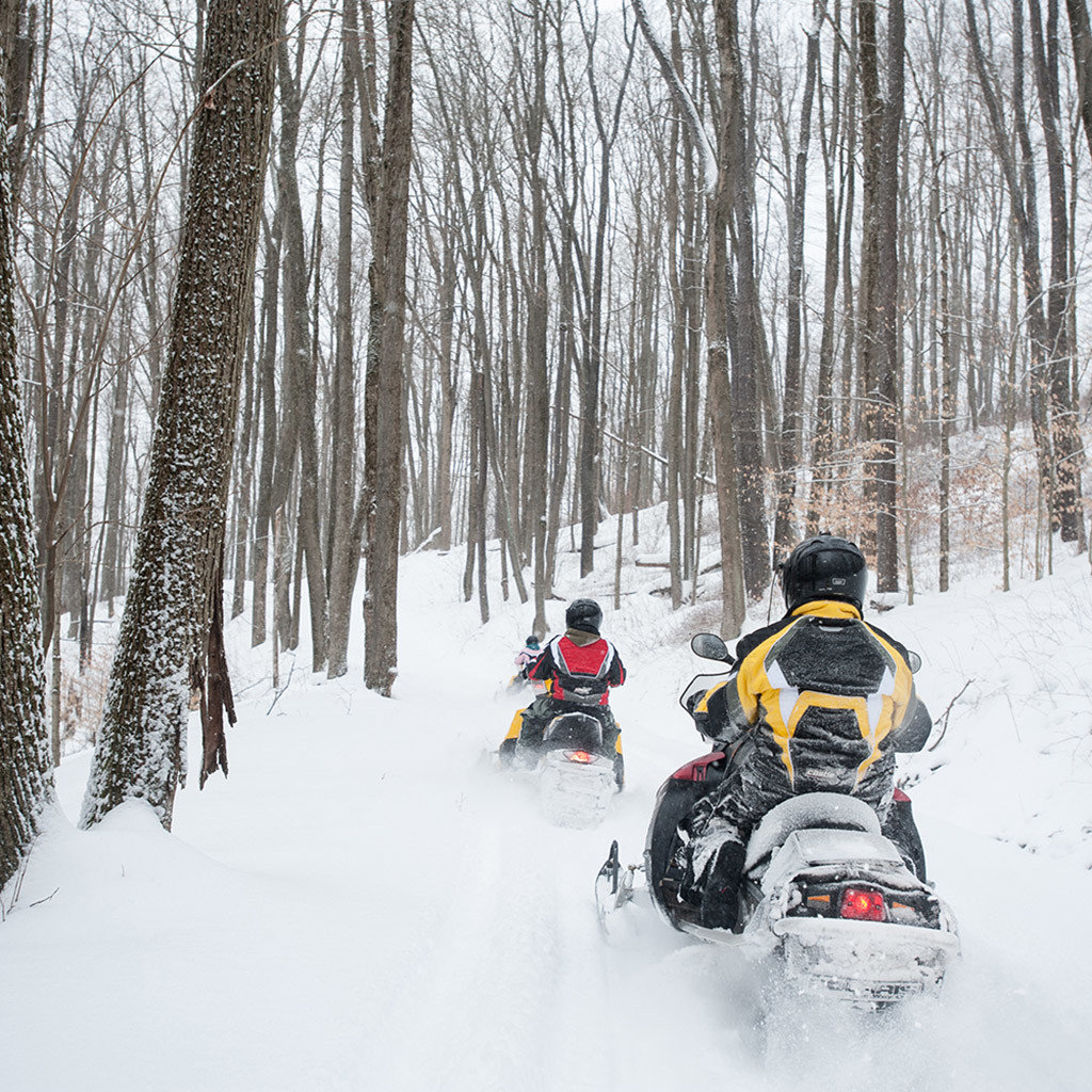 snowmobile transport snow tree vehicle land vehicle auto racing racing motorsport winter sport sports Winter footwear Forest day wooded
