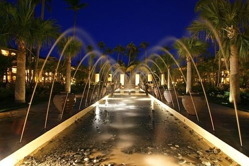 night lighting landscape lighting light fountain palm