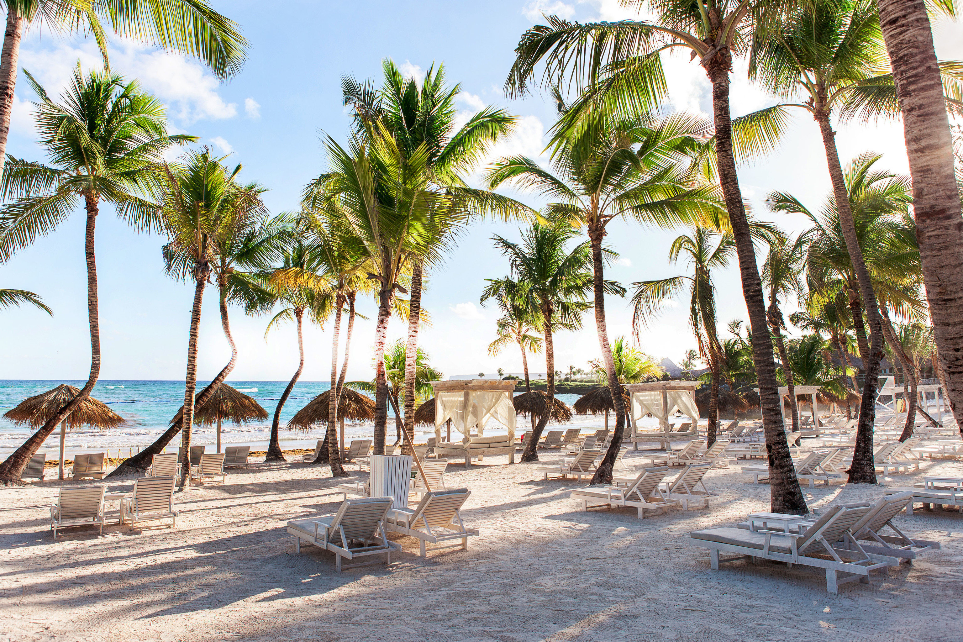 News Trip Ideas tree outdoor palm ground giraffe sky water plant Beach Resort vacation sandy caribbean palm family arecales tropics estate walkway Sea Pool shade lined shore several