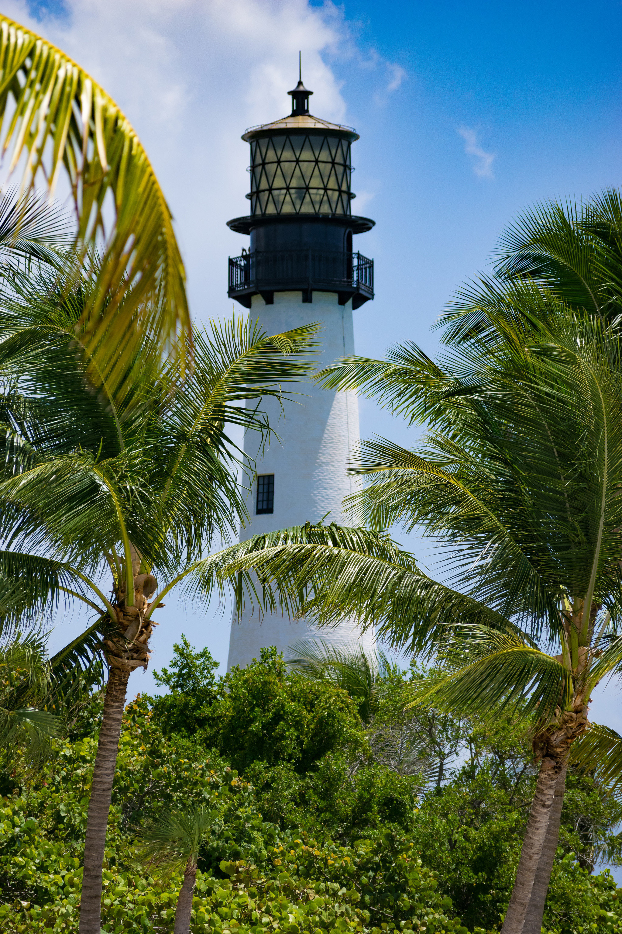 Trip Ideas tree outdoor sky tower green landmark palm tree arecales leaf tropics plant tourist attraction water lighthouse tourism grass palm