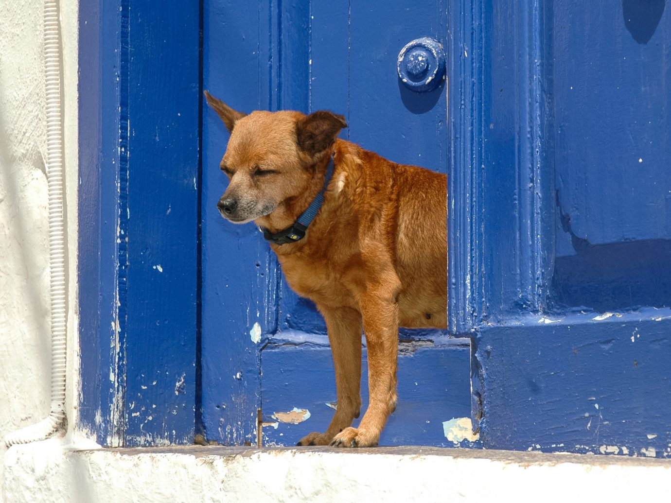Offbeat Trip Ideas Dog building blue brown outdoor mammal dog breed group snow street dog door Winter black puppy dog like mammal animal shelter doorway staring