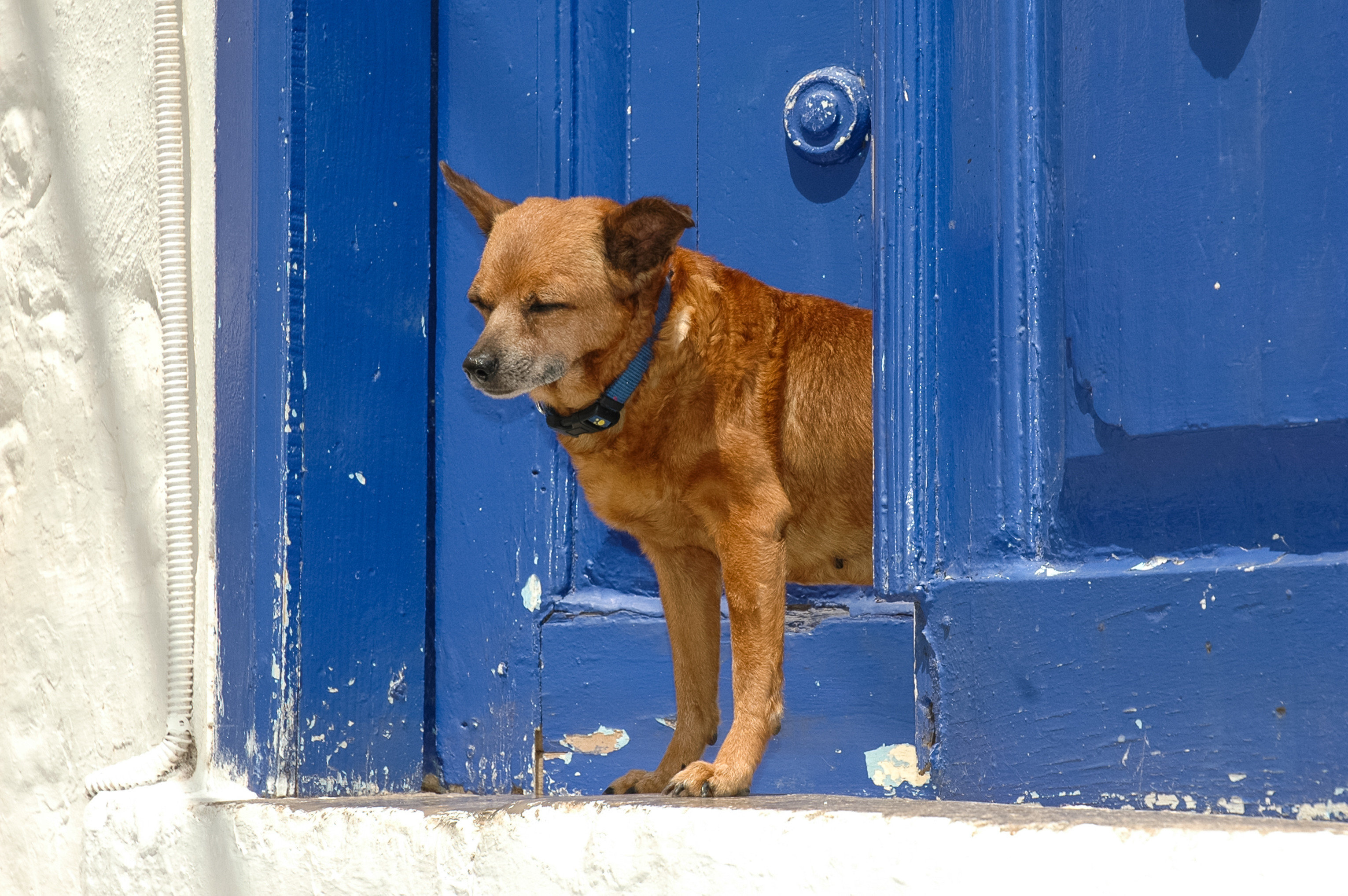 Offbeat Trip Ideas Dog building blue brown outdoor mammal dog breed group snow street dog door Winter black puppy dog like mammal animal shelter doorway staring