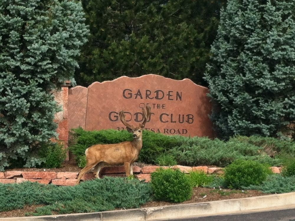 tree grass animal sign Garden yard mammal lawn zoo orange