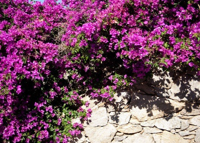 tree purple flower plant pink flora land plant woody plant flowering plant green shrub rhododendron breckland thyme blossom azalea annual plant surrounded Garden stone