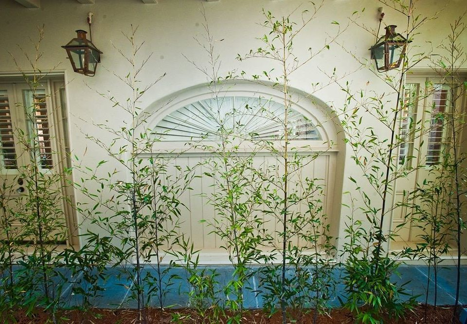 botany arch mural glass branch outdoor structure Garden flower plant painted