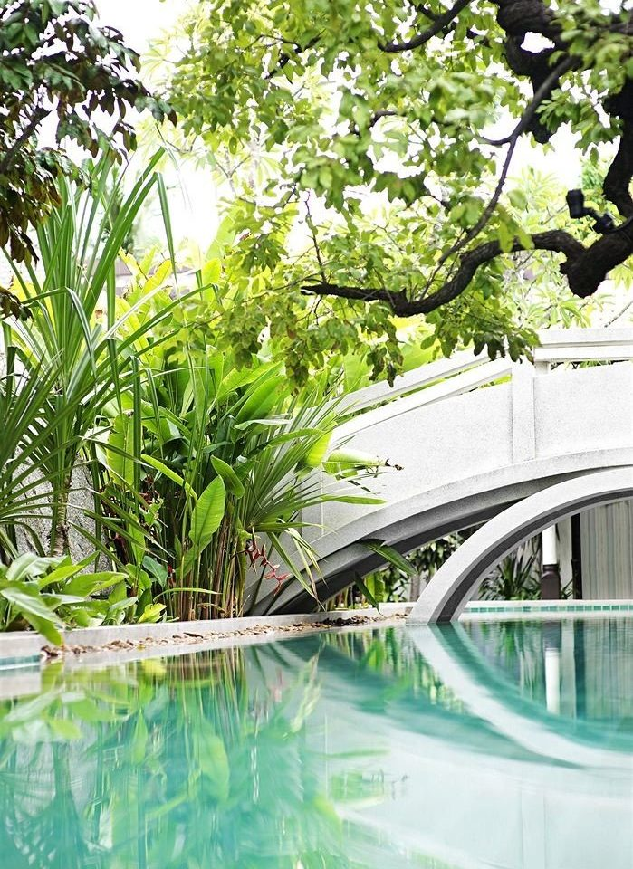 tree swimming pool plant botany arecales Garden flower backyard landscape architect botanical garden