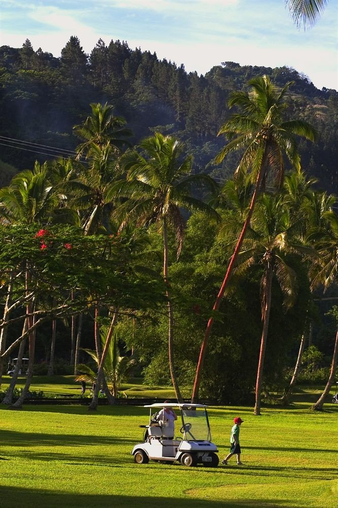 tree grass green botany plant arecales woody plant leaf flower rural area palm family park vehicle tropics Garden palm lush