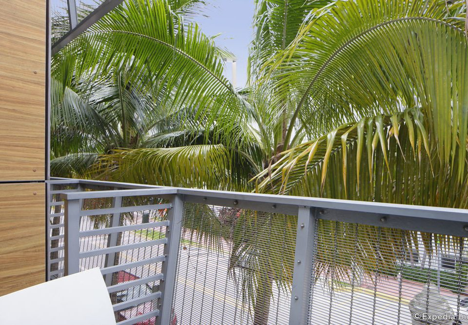 tree botany plant palm arecales palm family Garden outdoor structure