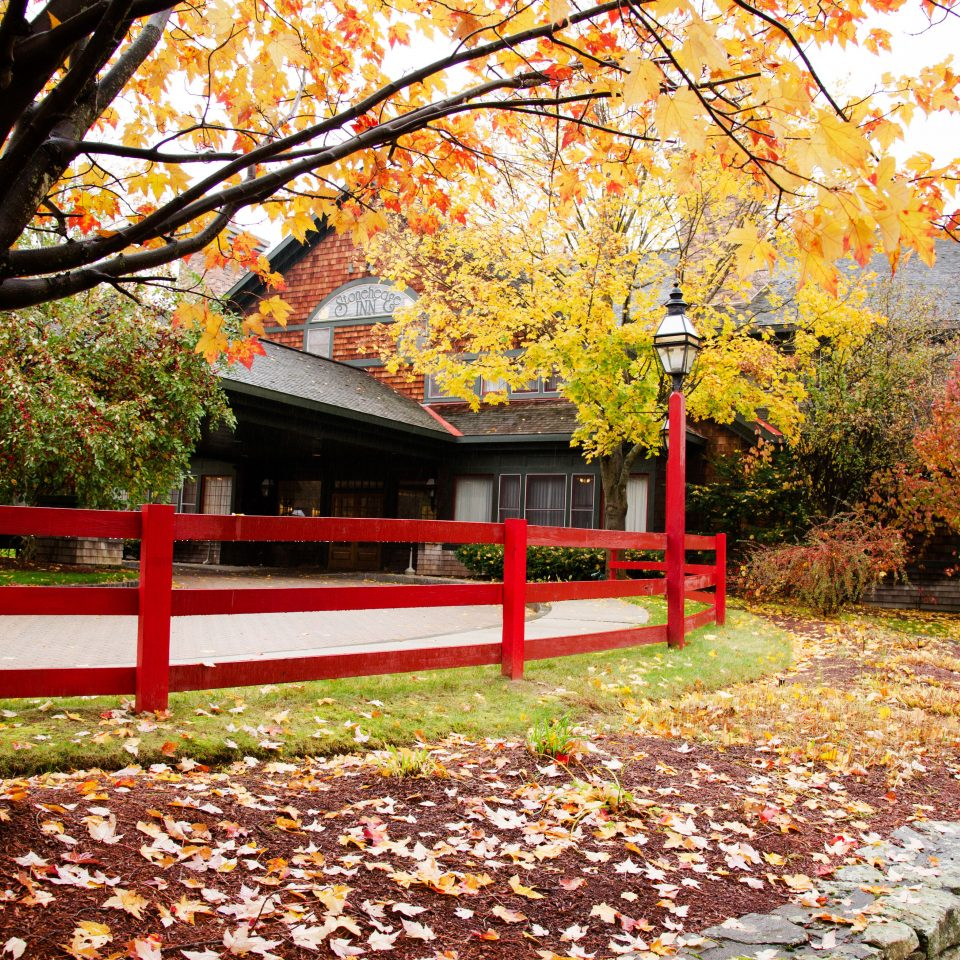 tree grass ground park autumn season red leaf plant woody plant flower Garden home spring backyard