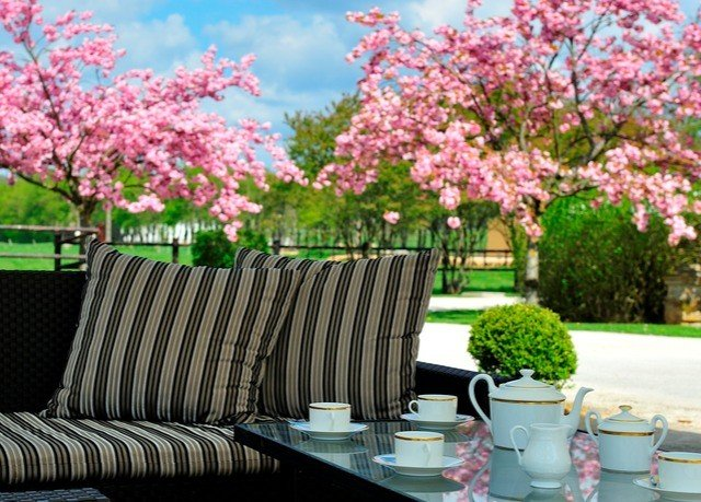 flower plant spring tree flora cherry blossom blossom flowering plant shrub pink sofa Garden branch landscaping backyard seat