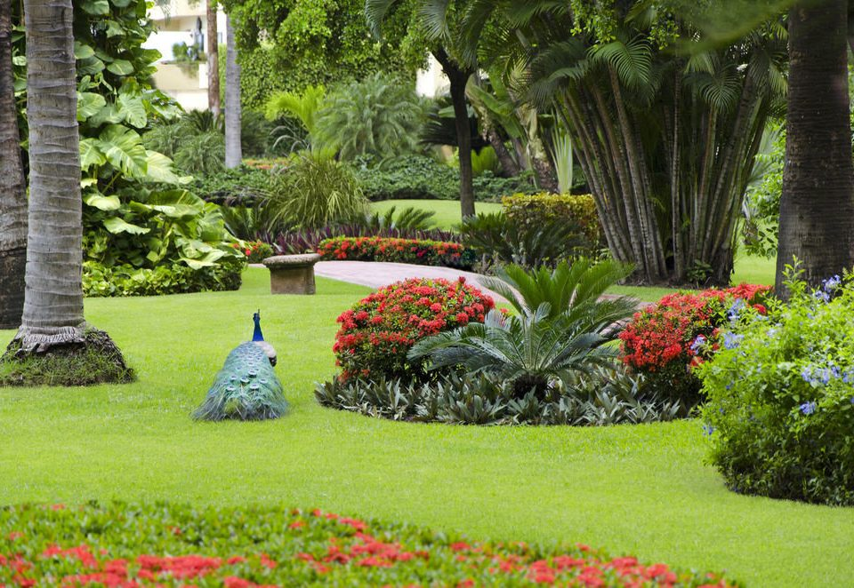grass tree lawn Garden yard backyard botany plant park flower green botanical garden landscape architect landscape garden designer landscaping grassy shrub lush surrounded