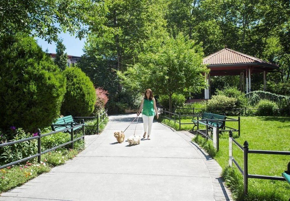 tree grass park Garden sidewalk walkway backyard yard botanical garden plant