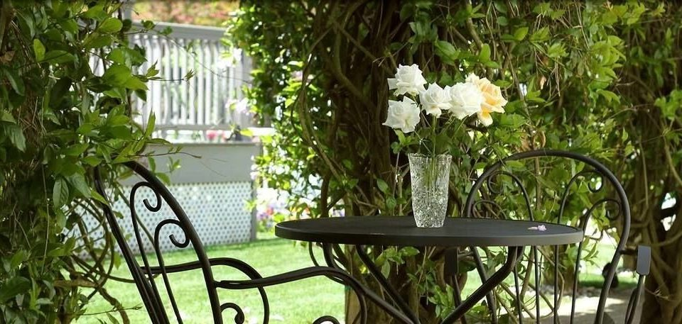 tree flower porch flora botany plant floristry Garden backyard lighting yard outdoor structure cottage dining table