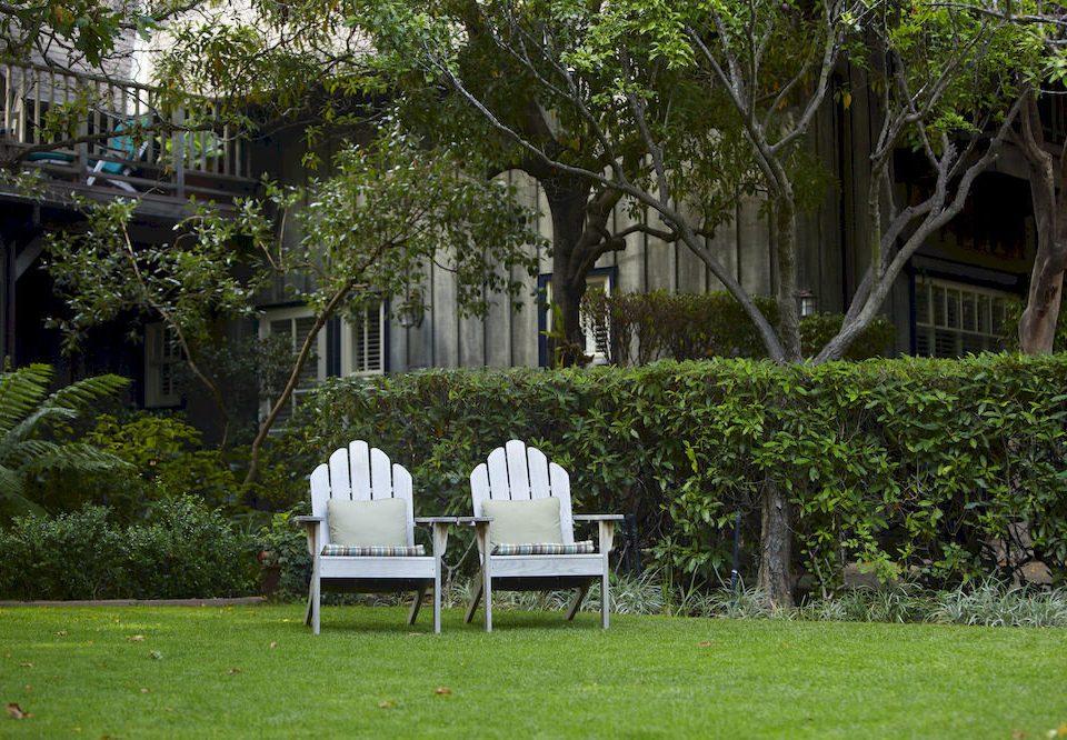 grass tree green botany lawn park house Garden flower backyard yard rural area
