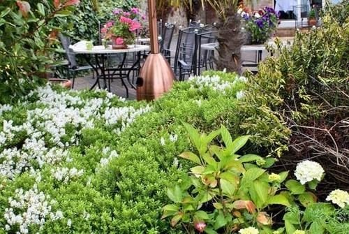 tree plant flower Garden yard shrub lawn backyard landscape architect landscaping herb bushes surrounded fresh vegetable
