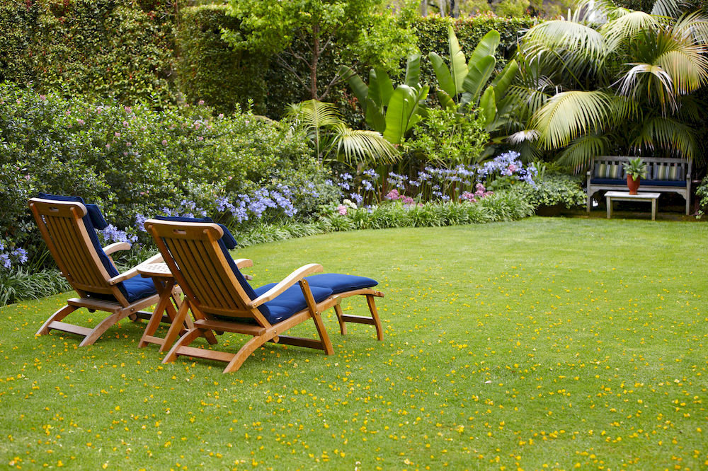 grass tree chair leisure lawn backyard seat yard Garden flower meadow park empty surrounded