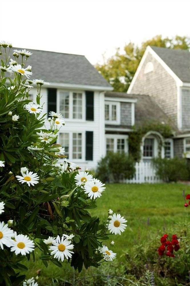 flower tree grass house lawn plant yard Garden home cottage backyard yellow shrub meadow landscaping surrounded