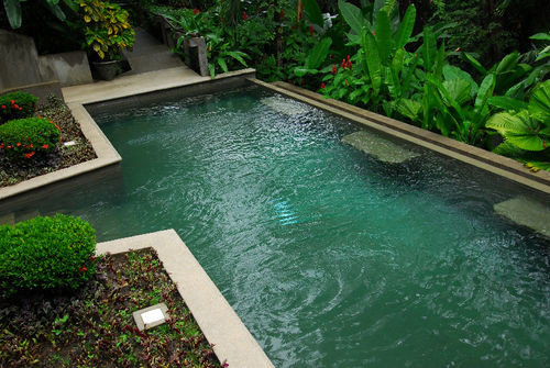 plant swimming pool property backyard pond reflecting pool fish pond lawn landscape architect yard Garden landscaping