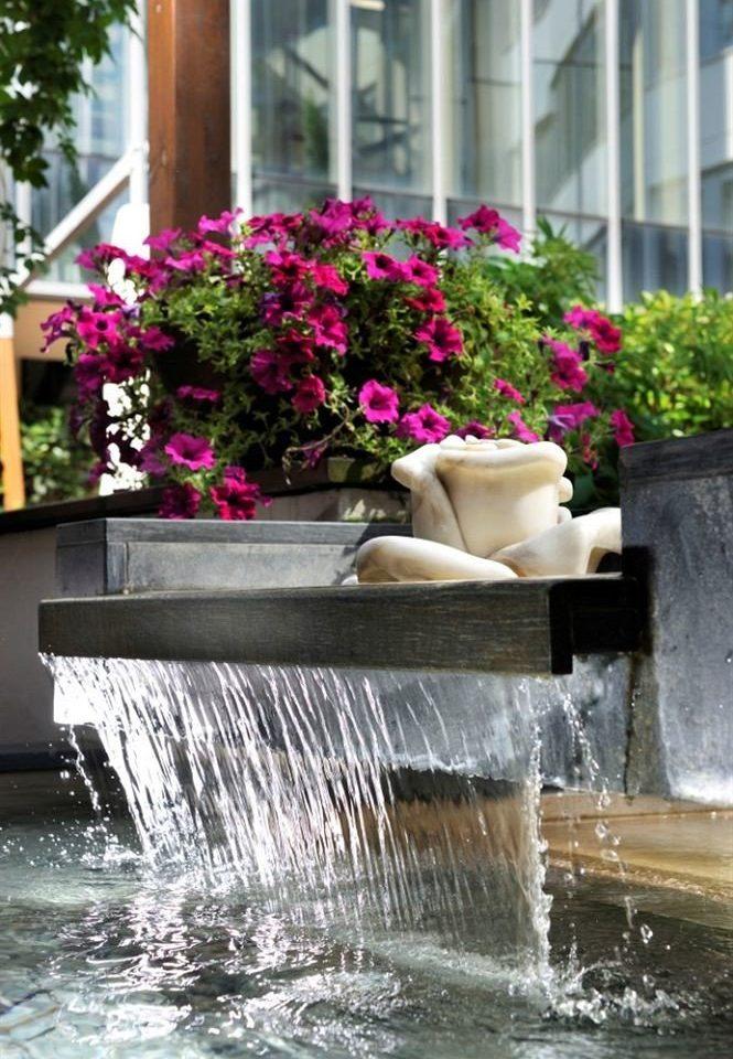 flower fountain water feature plant Garden floristry backyard