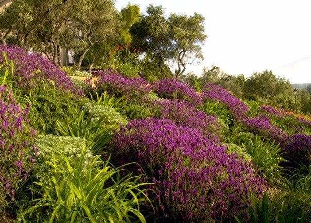 tree flower purple Garden plant flora botany grass lawn bushes land plant shrub flowering plant meadow yard surrounded botanical garden landscaping lush
